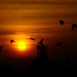 sunsetsilhouette sunset sunsetphotography sunsetlovers birdsphotography