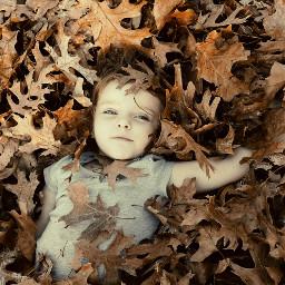 leavesontheground leavesfall autumn