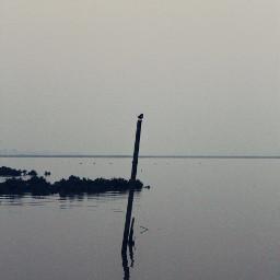 sea seawater seaweeds seabird reflection
