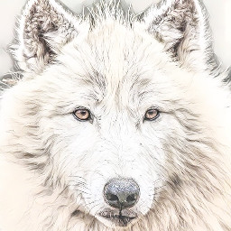 sketchyeffect wolf