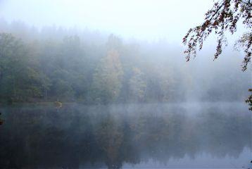 landscape nature lake firtree fog