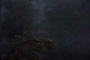 nature dark firtree lake