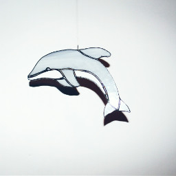 dolphin simple minimalism freetoedit dpccoloredglass
