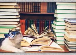 library cat studious glasses bookaholic
