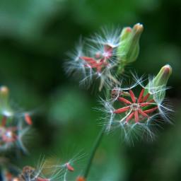 macro green plant
