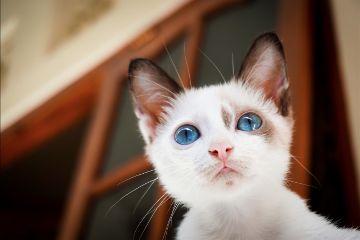 freetoedit cat pet animal cute