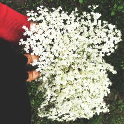 flower whiteflowers elderflower shoes shoefie