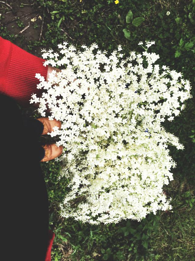 #flower #whiteflowers #elderflower #shoes #shoefie #spring