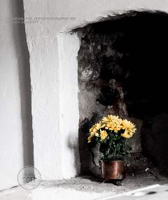 interior old flower yellow lifestyle