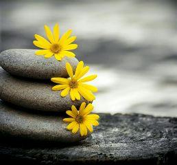 nature flower newcam