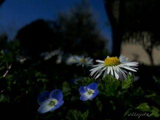 noedit nature naturephotography flower spring freetoedit