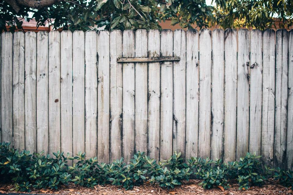 #FreeToEdit #fence #plants #nature #colorful #patterns
