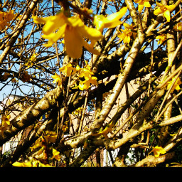 freetoedit spring yellow photography