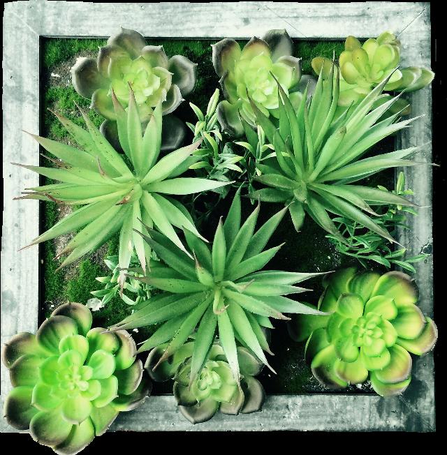 #plants#FreeToEdit