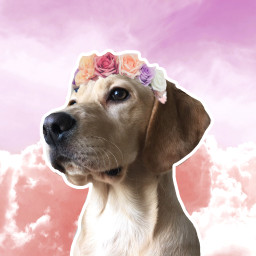 clouds dog flowercrown nationalpuppyday puppyday freetoedit