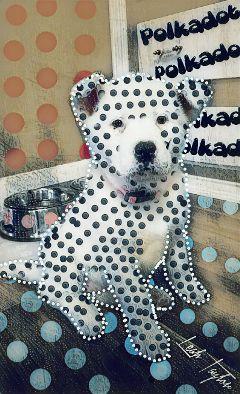 wapdots polkadots puppy akita petsandanimals