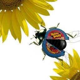 freetoedit sunflower ladybird cute hubbabubbaremix