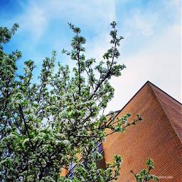 autumn trees spring bluesky