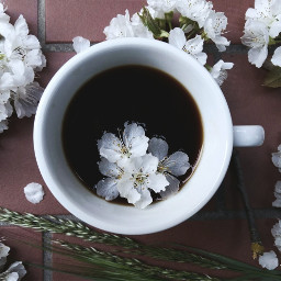 dpcblossom blossom coffee coffelover coffeeaddict