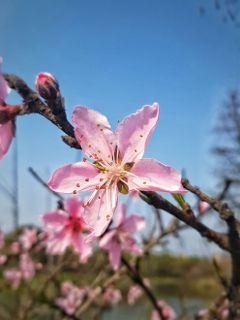 blossom flower spring nature shanghai