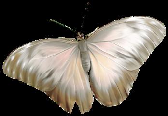butterfly white freetoedit