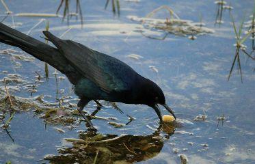 photography bird pets nature
